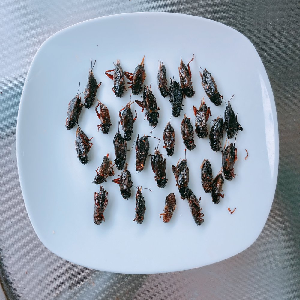 Fried and Baked Bugs. Photo by Laura D'Asaro