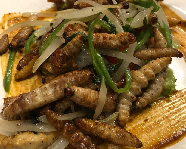 A self-confessed picky eater who was plagued by food intolerances, has become a fully-fledged gastronome after she began cooking with bugs (worm stir fry seen)