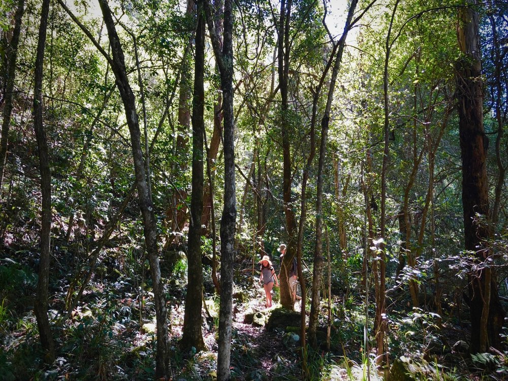 forest walk.jpg