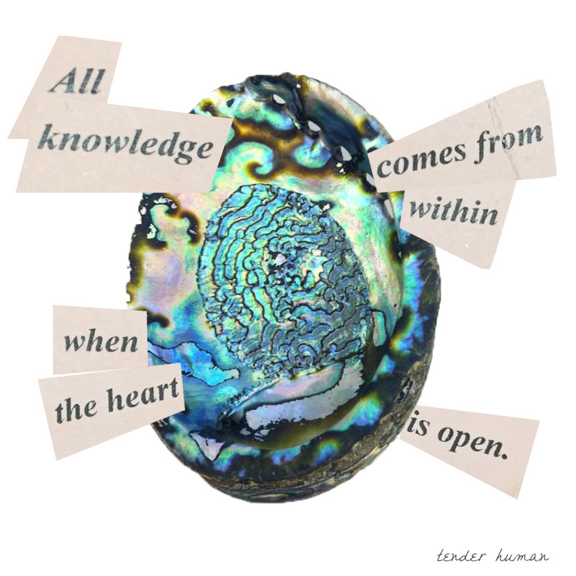 ABALONE-FORTUNES-09.jpg