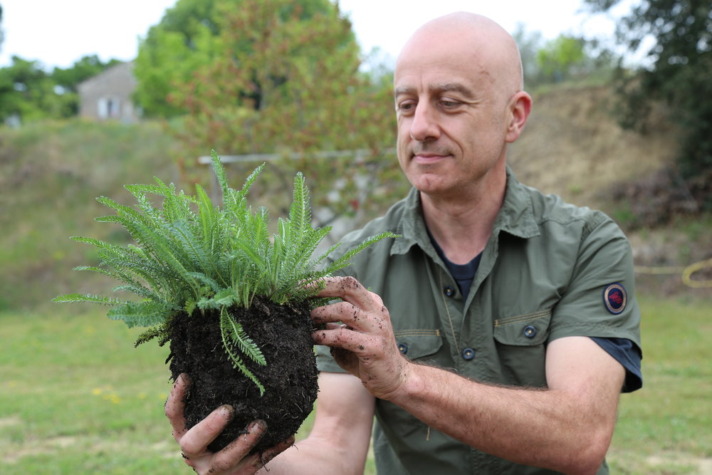Christophe BERNARD achillee-achillea-millefolium-P_S-20.JPG