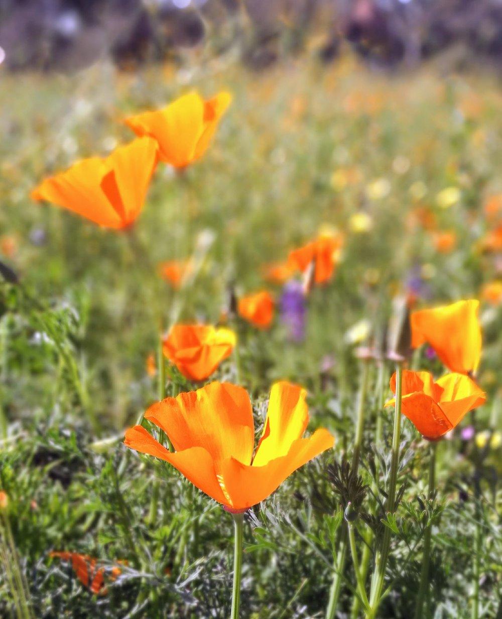 beautiful-bloom-blooming-1047967.jpg