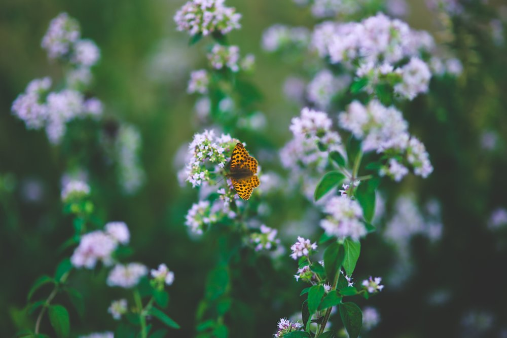 blooming-blur-butterfly-6031.jpg