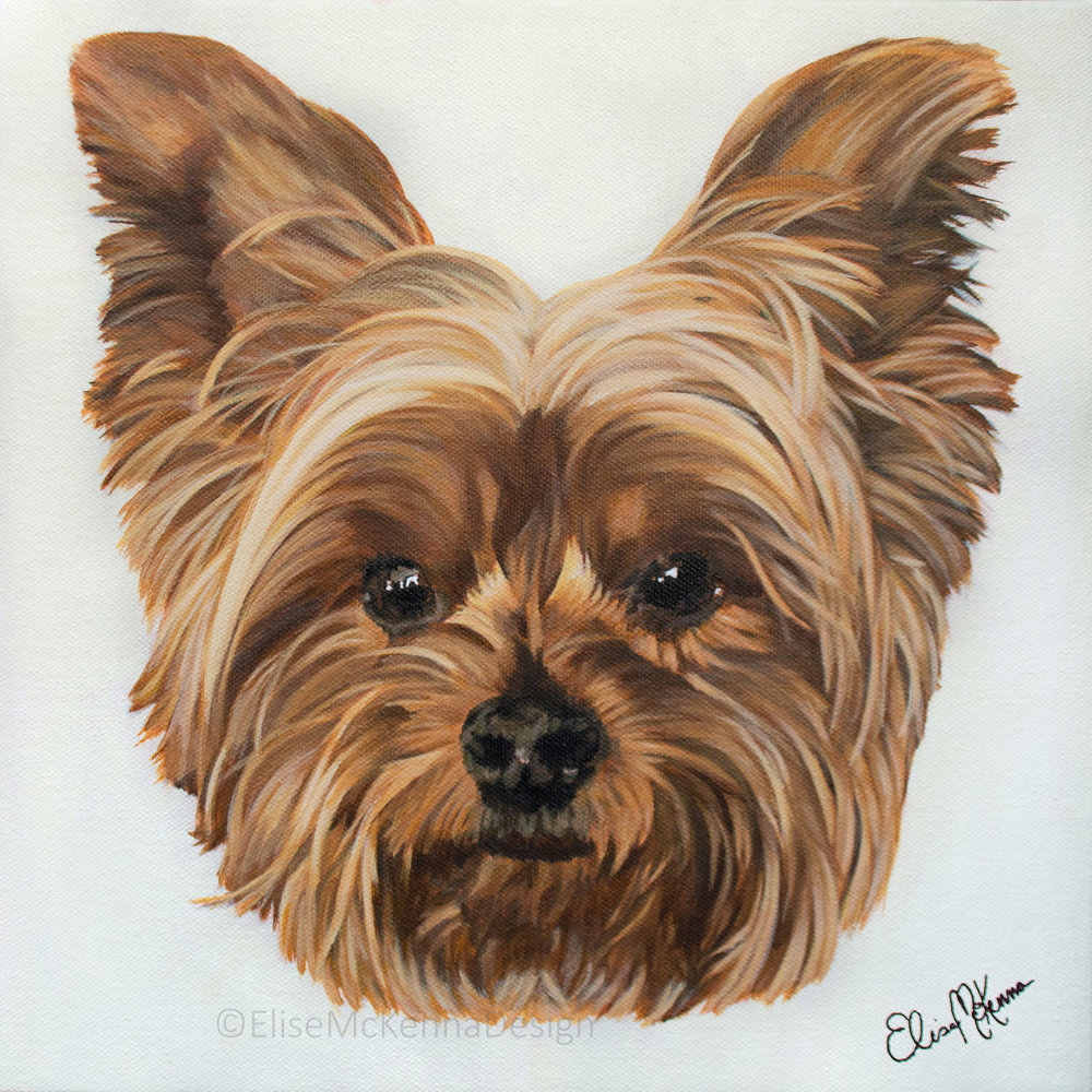 Sherman; Yorkie;  acrylic on canvas; 12 x 12 x 1""