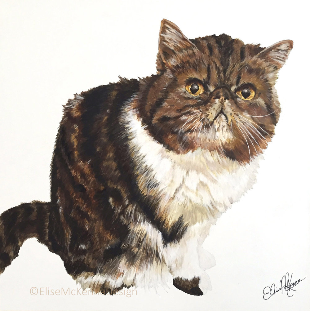Sommer (also my baby!); Exotic Shorthair tabby;  acrylic on mounted aquabord; 12 x 12 x 1""