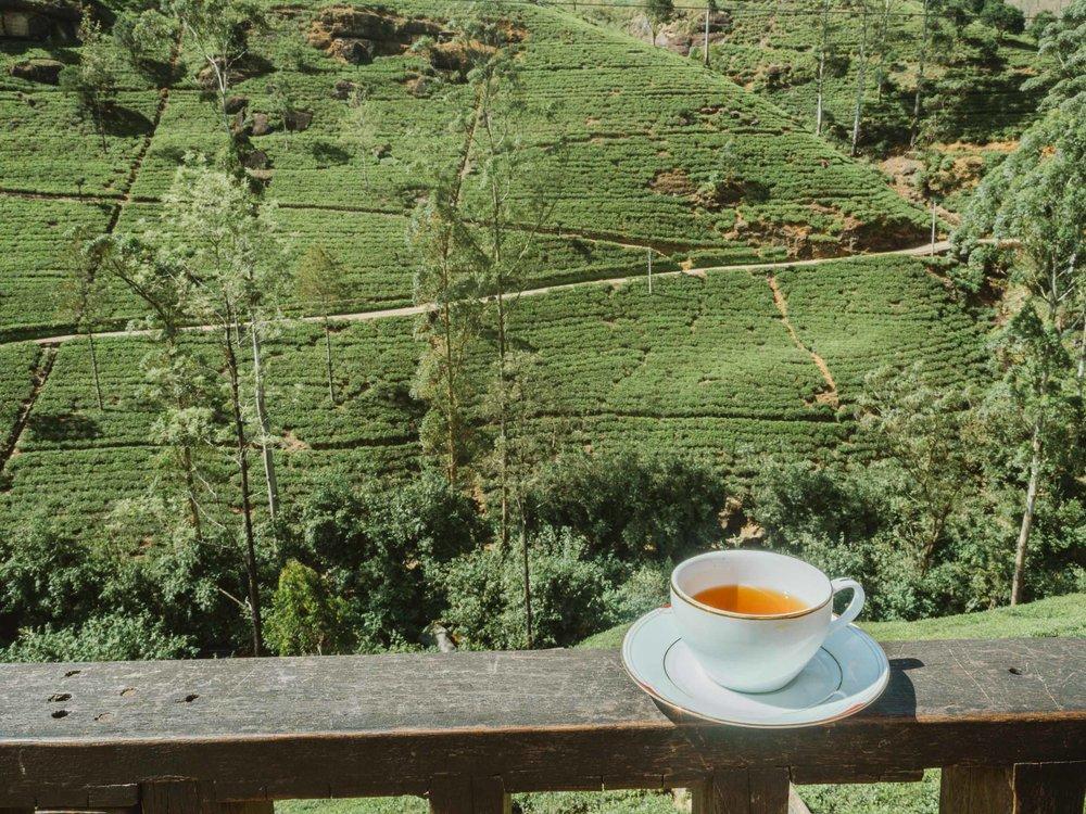 Nuwara_Elyia_Sri_Lanka_Tea.jpg