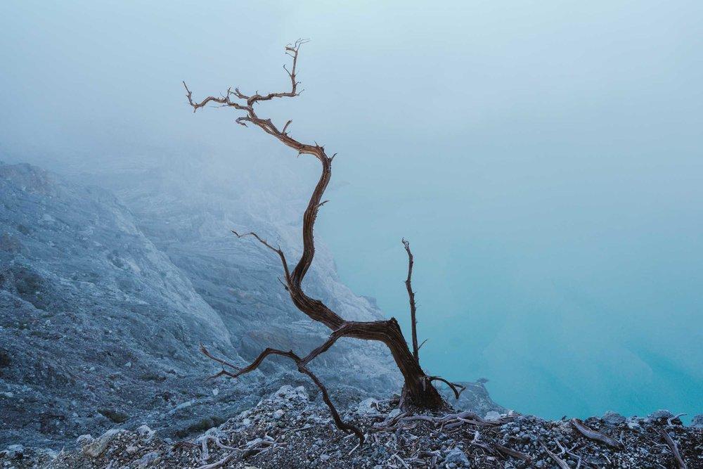 Kawah-Ijen-Tree.jpg