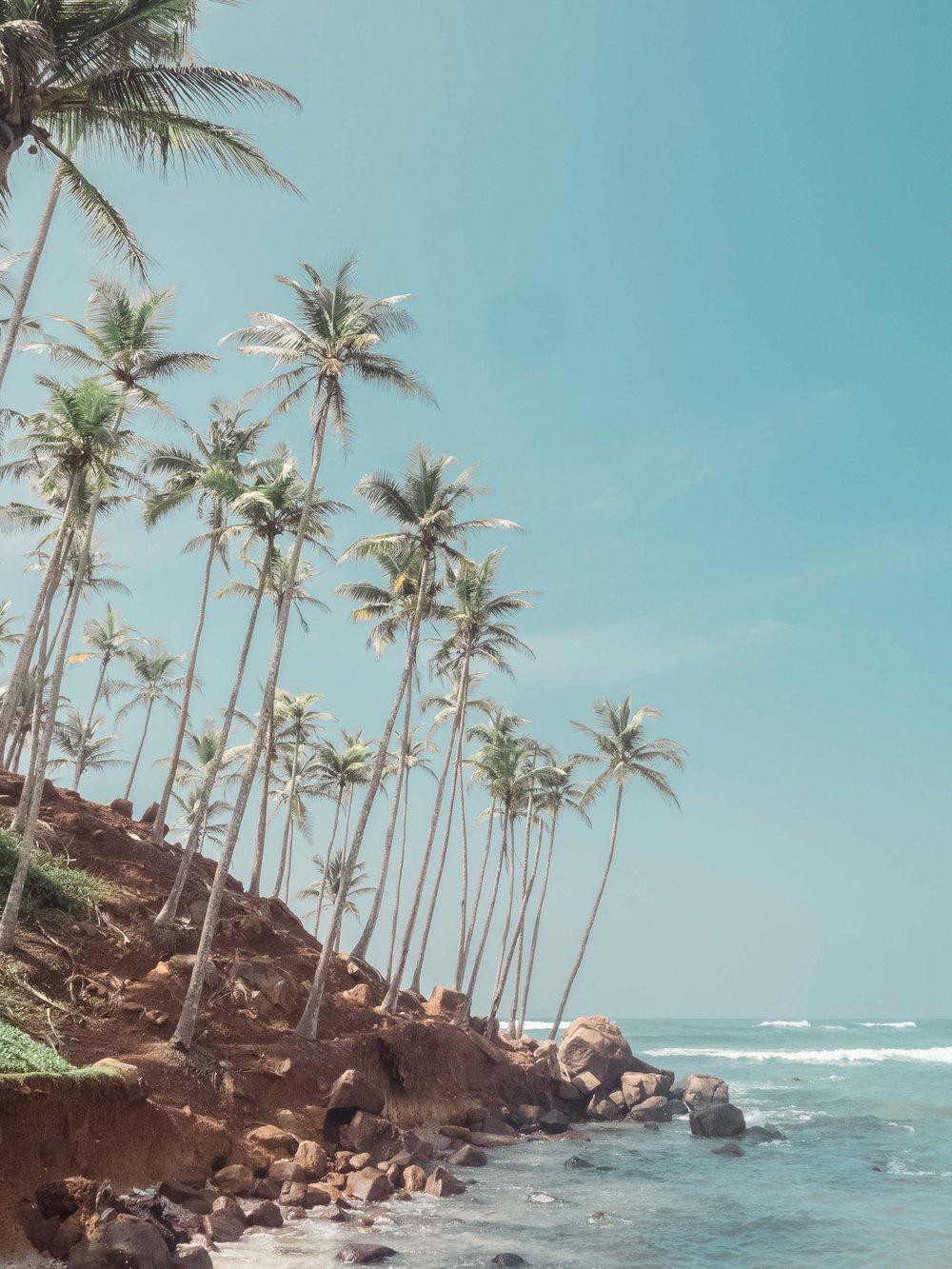 Mirissa_Sri_Lanka.jpg