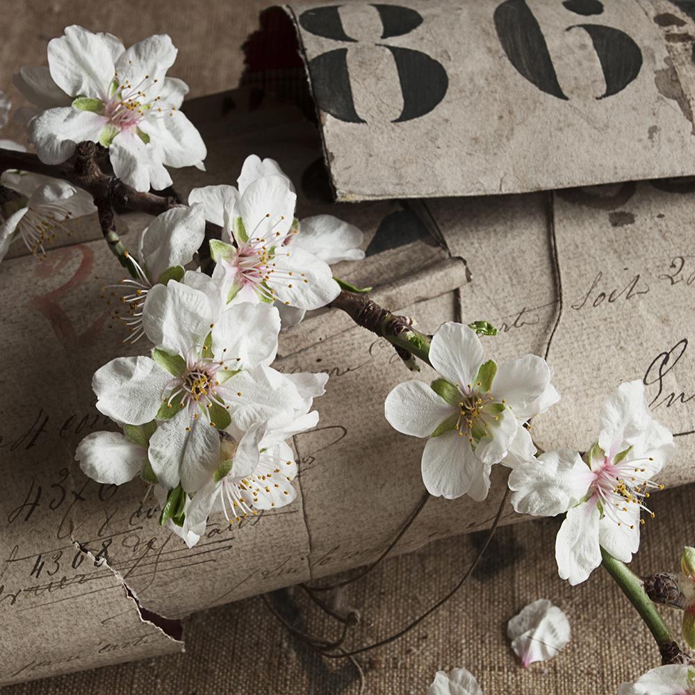 fleur et papier 02 web.jpg