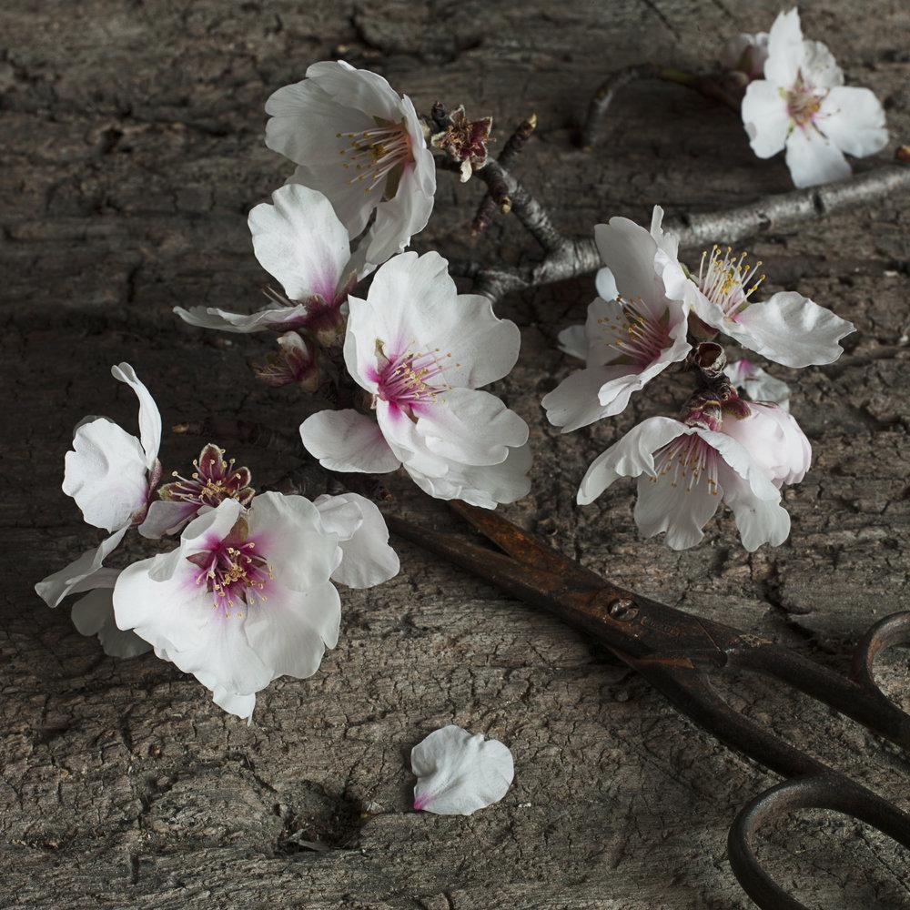 fleur (2).jpg