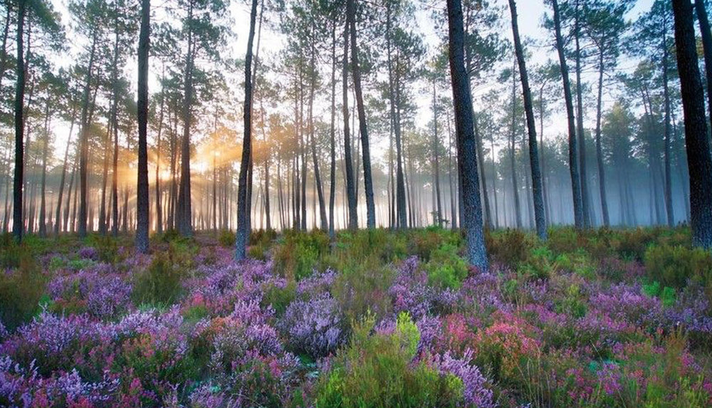 A walk in the forest ? -