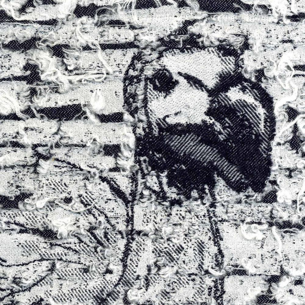 Copy of Copy of Dodo, Raphus cucullatus