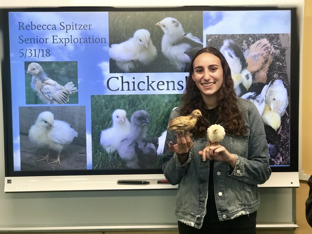 Rebecca Spitzer (HS '18) did a project on raising chickens!