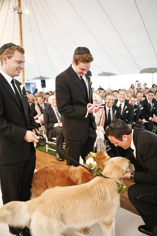 Finn Schultz as ring bearer at Breanna's wedding