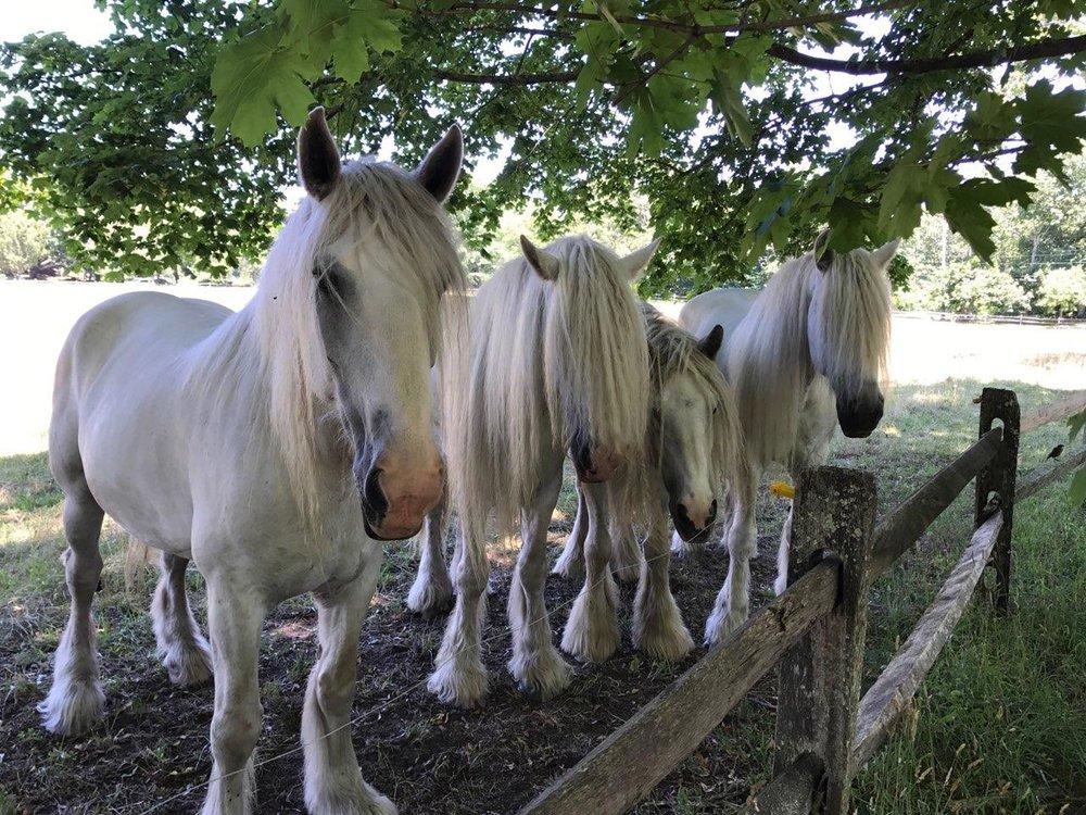 Gunner, Patsy, Isabelle & Tess