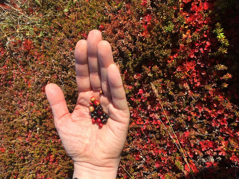 Tundra-berries-1000px.jpg