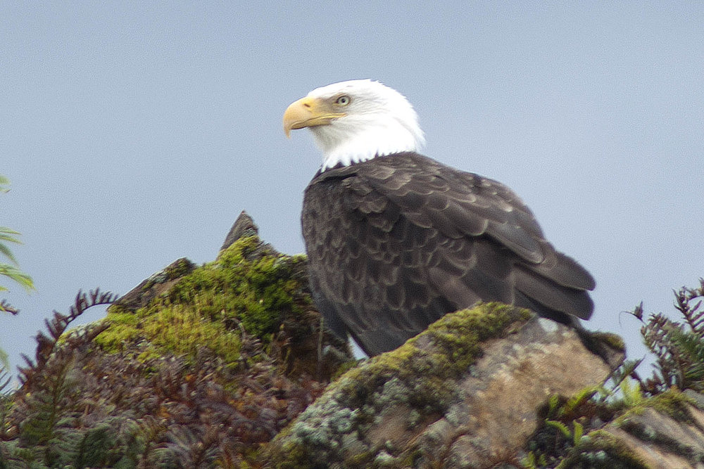 bald eagle rocks.jpg