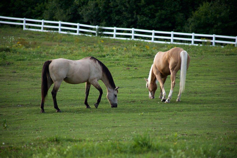 animals-farm-horses-9582.jpg