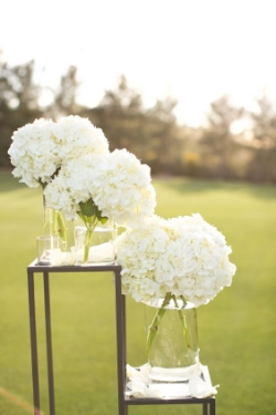 Hydrangea - Massive, lush blooms in vibrant colors. - Available year round