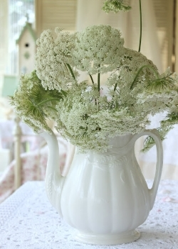 Queen Anne's Lace - Dainty fringe style bloom brings a delicate touch of the Victorian era. - Available May-September