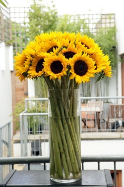 Sunflower  - Huge, showy blossoms shout out the joy of summer! Available July - October.