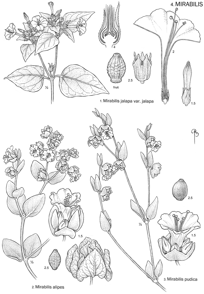 Intermountain Flora
