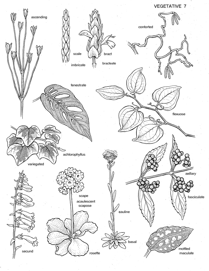 A Botanist's Vocabulary terms