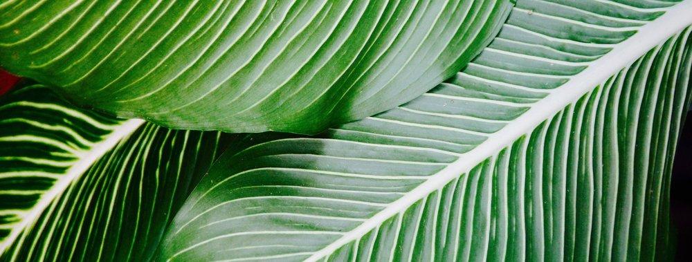 palm-1185677_1920.jpg