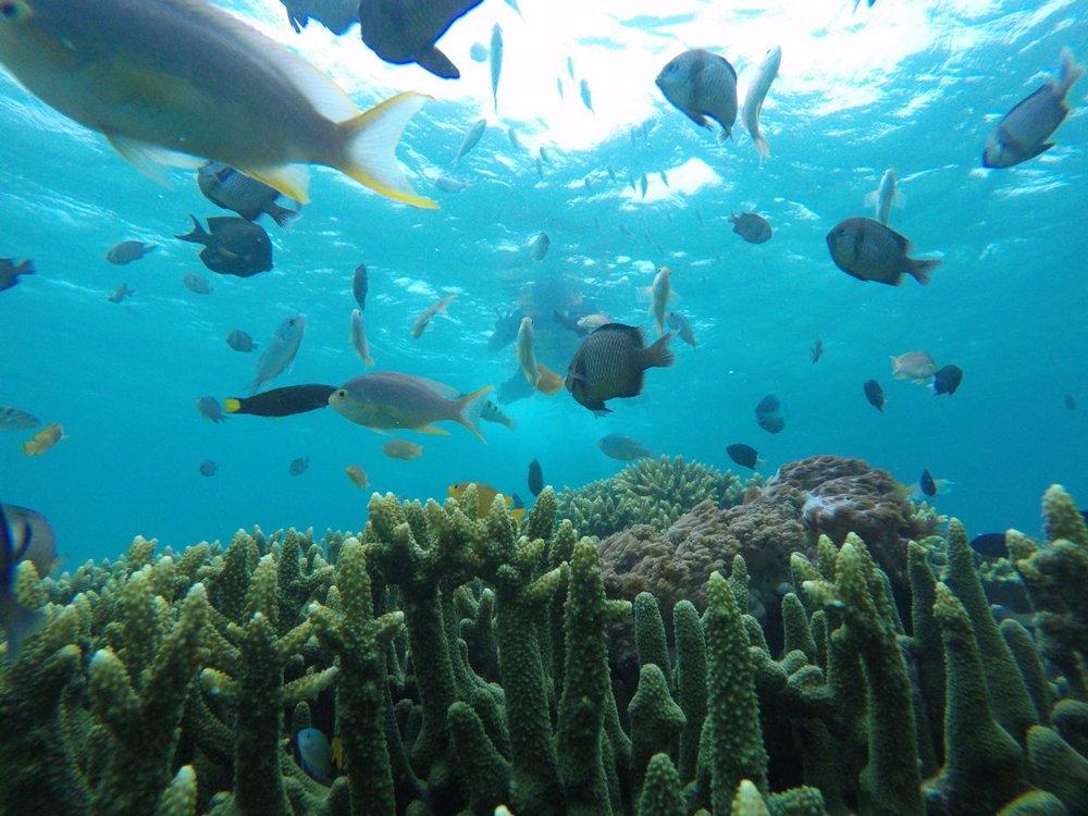 lombok snorkling