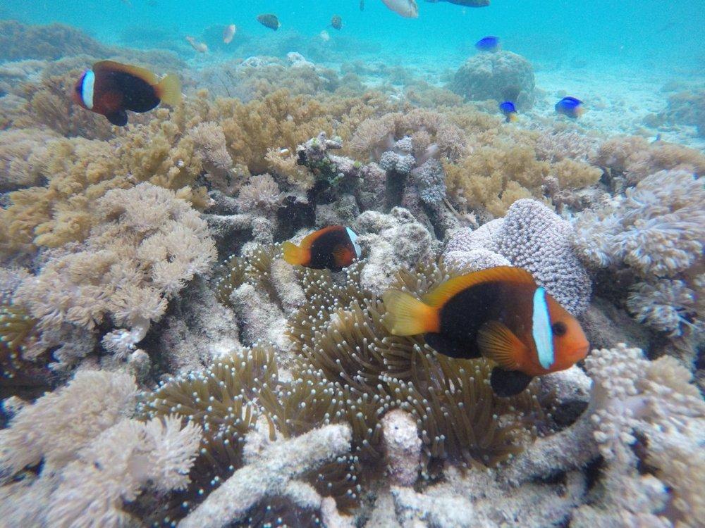 lombok snorkling tour