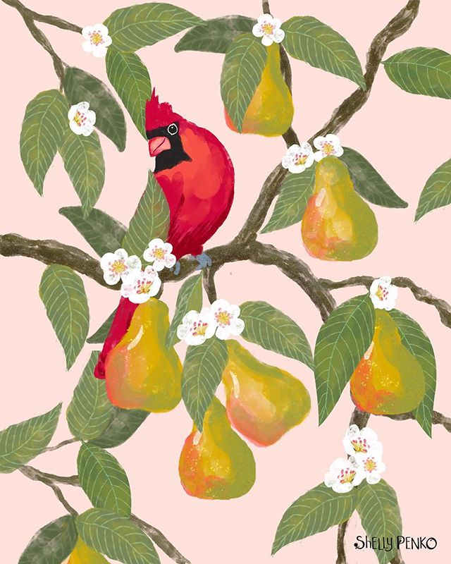A pretty cardinal in a pear tree for the end of the weekend!  I hope yours was lovely!  I spent mine being super lazy getting lots of rest!  This design is not particularly tropical, but I loved the color palette from @victoriajohnsondesign  #exploreflorals class last week so much, I wanted to work from it again. ♥️ #illustratorsoninstagram  #illustratorsofinstagram #illustration #surfacepatterndesign #patterndesign #shellypenko #cardinal #birdart #ihavethisthingwithcolor #procreateart #pears