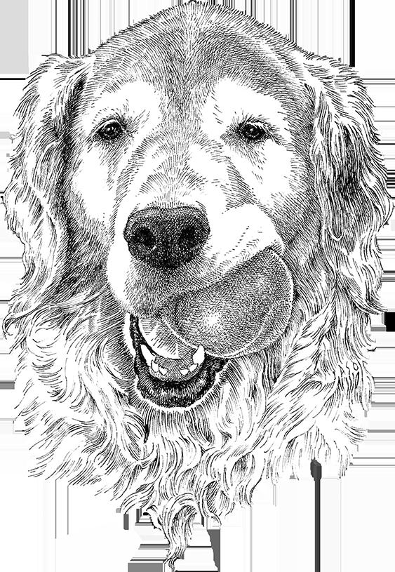 IASO_DogBall-15-web.png