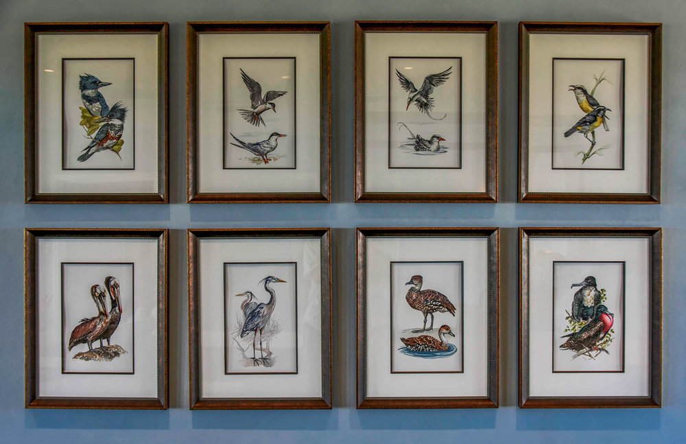 Jumby Bay<strong>Custom curated hand painted birds of the island of St. Lucia with custom frame</strong>