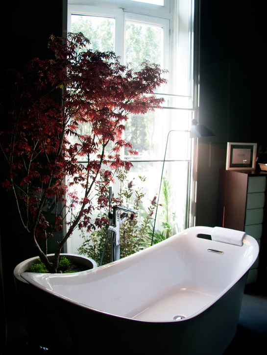 The dwarf red Japanese Maple gave us the color splash in this bathroom.