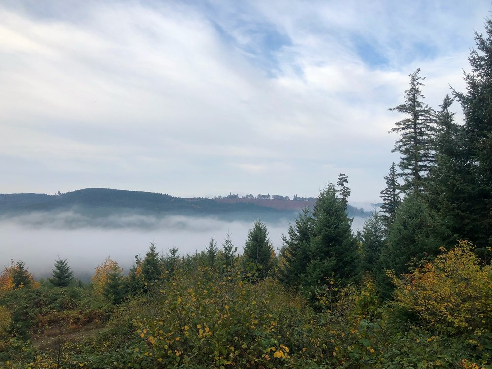 Mist in the valley below