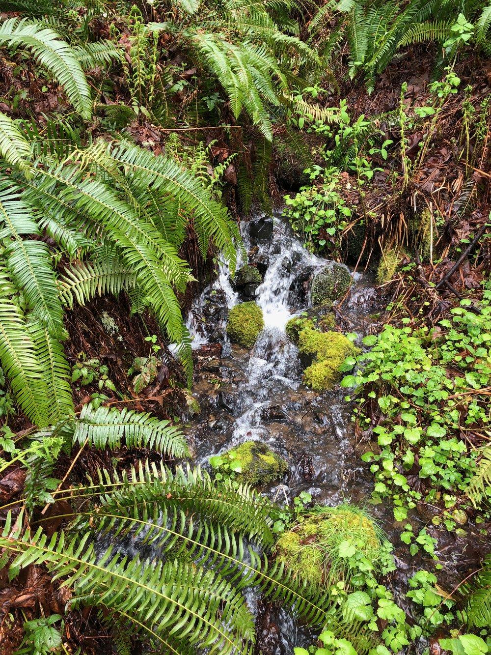 Waterfall at seasonal creek