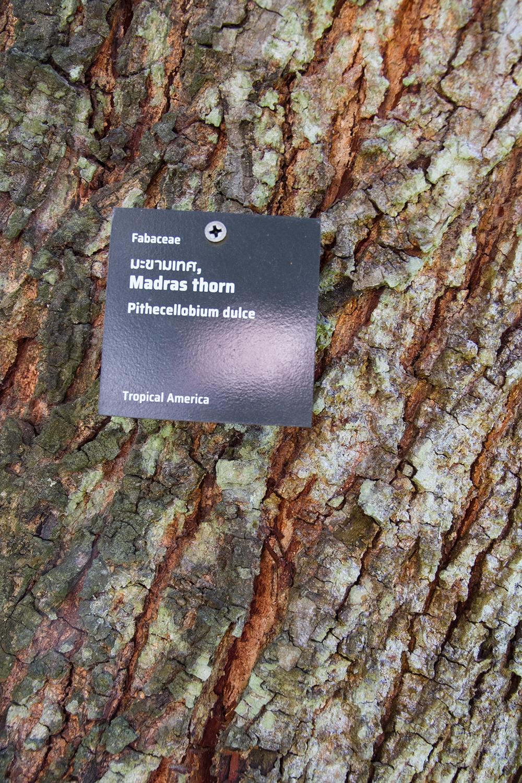 kaomai museum_tree label