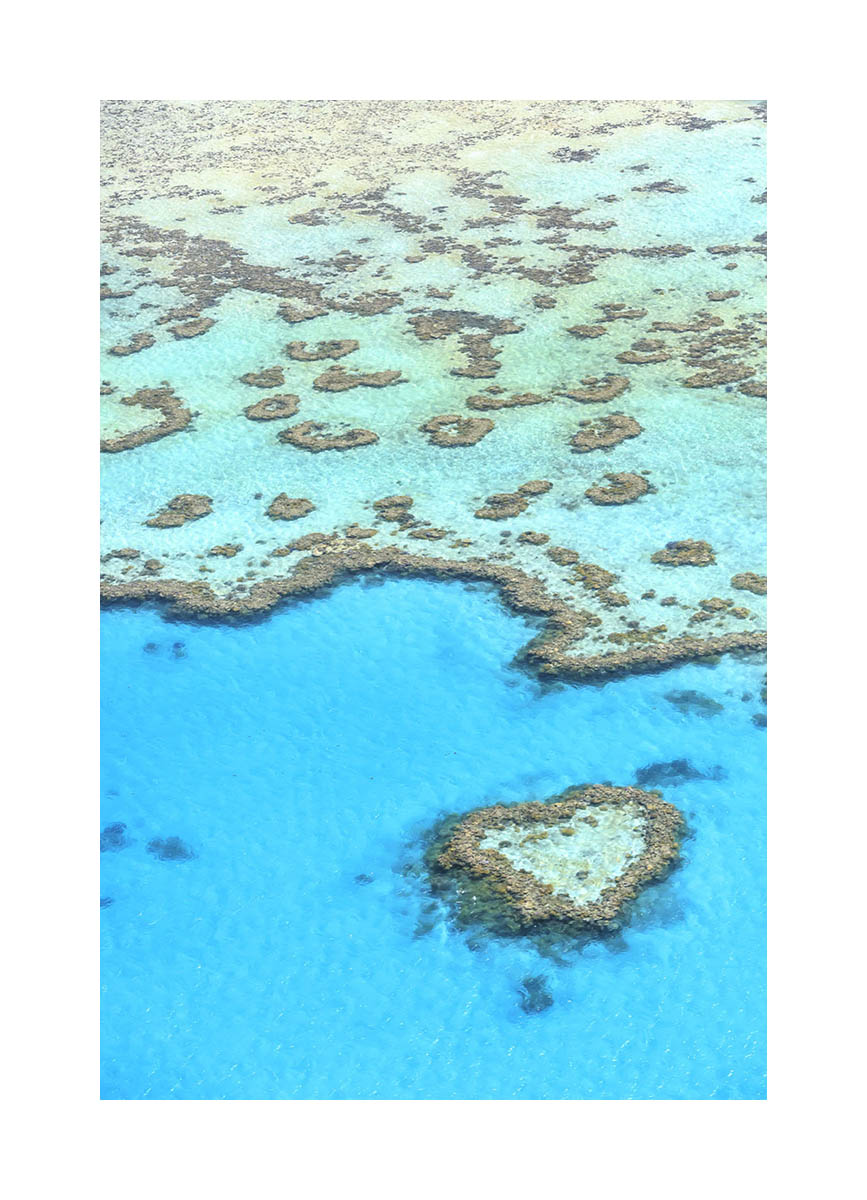Whitsundays Islands coral reef, Australia
