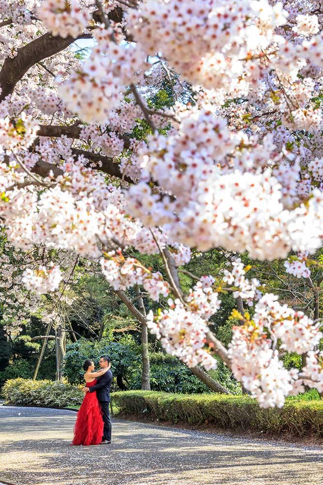 Sakura - Il nostro viaggio sarà accompagnato dai colori e dagli odori della fioritura dei ciliegi. In particolare nella zona del monte Fuji ed a Kyoto.