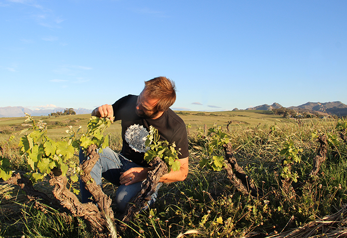 Eben Sadie loves the old dry farmed vines of South Africa.