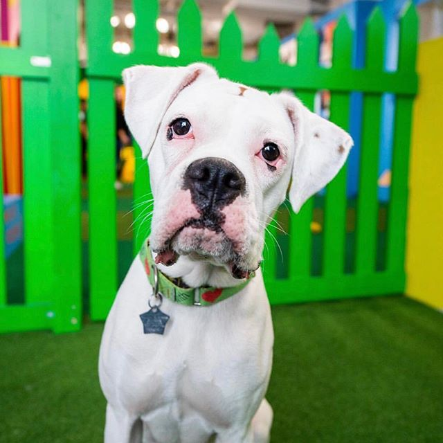 Join us this weekend for your final chance to visit Human's BF in NYC‼️ 📸: @thedogist