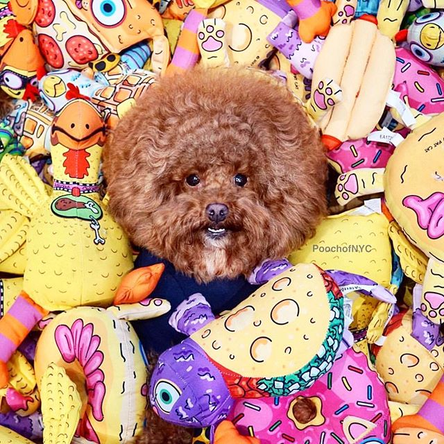 Surprise‼️Come play hide and seek with us this weekend ❤️ Thank you to @petmatepetproducts for helping us make fetch happen ❤️📸: @poochofnyc #humansbf