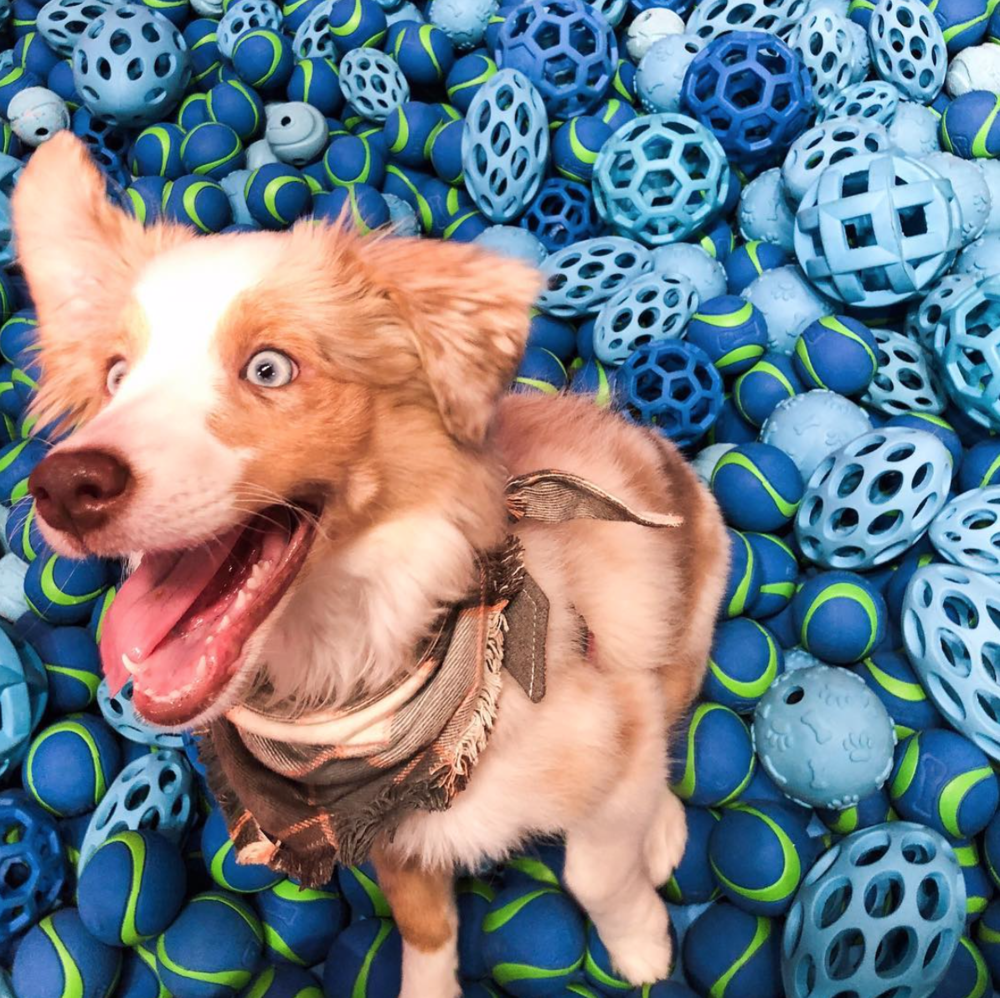 THE WATER BOWL - A larger-than-life dog bowl serves as the centerpiece of this space, filled to the brim with tempting blue tennis balls.