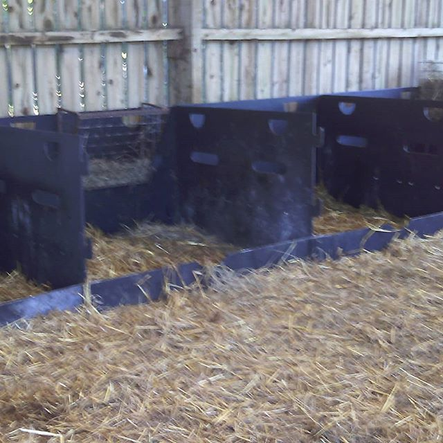 September lambing finished and now time to clean up the mothering pens for the November and December batch!