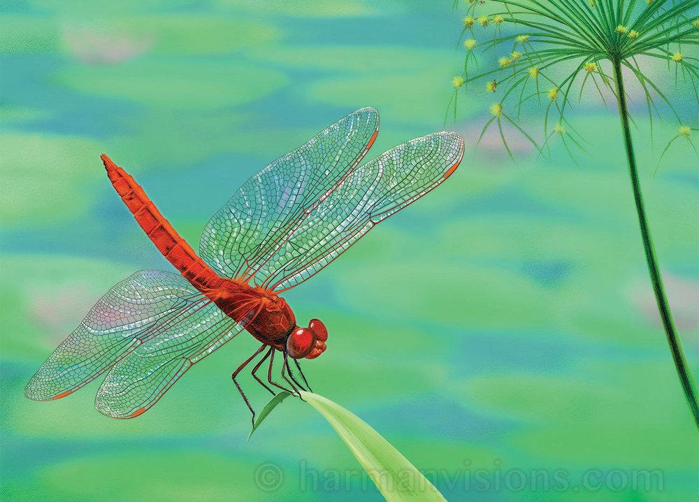 Dragonfly Visitation