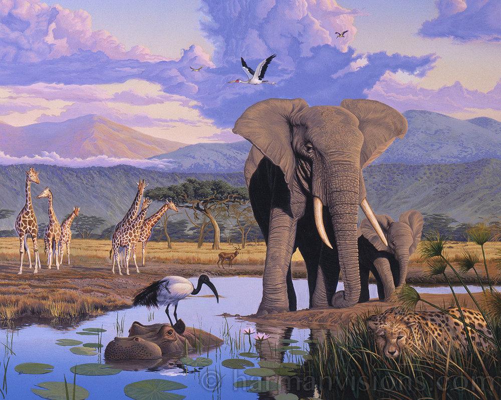 Africa Elephant