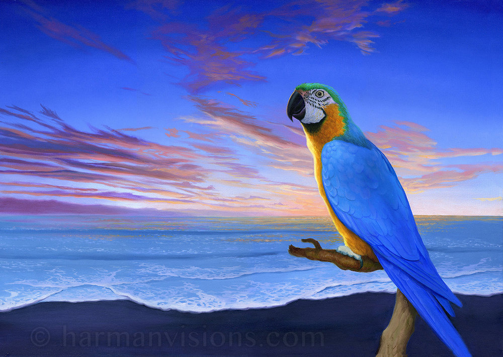 Macaw Sunset