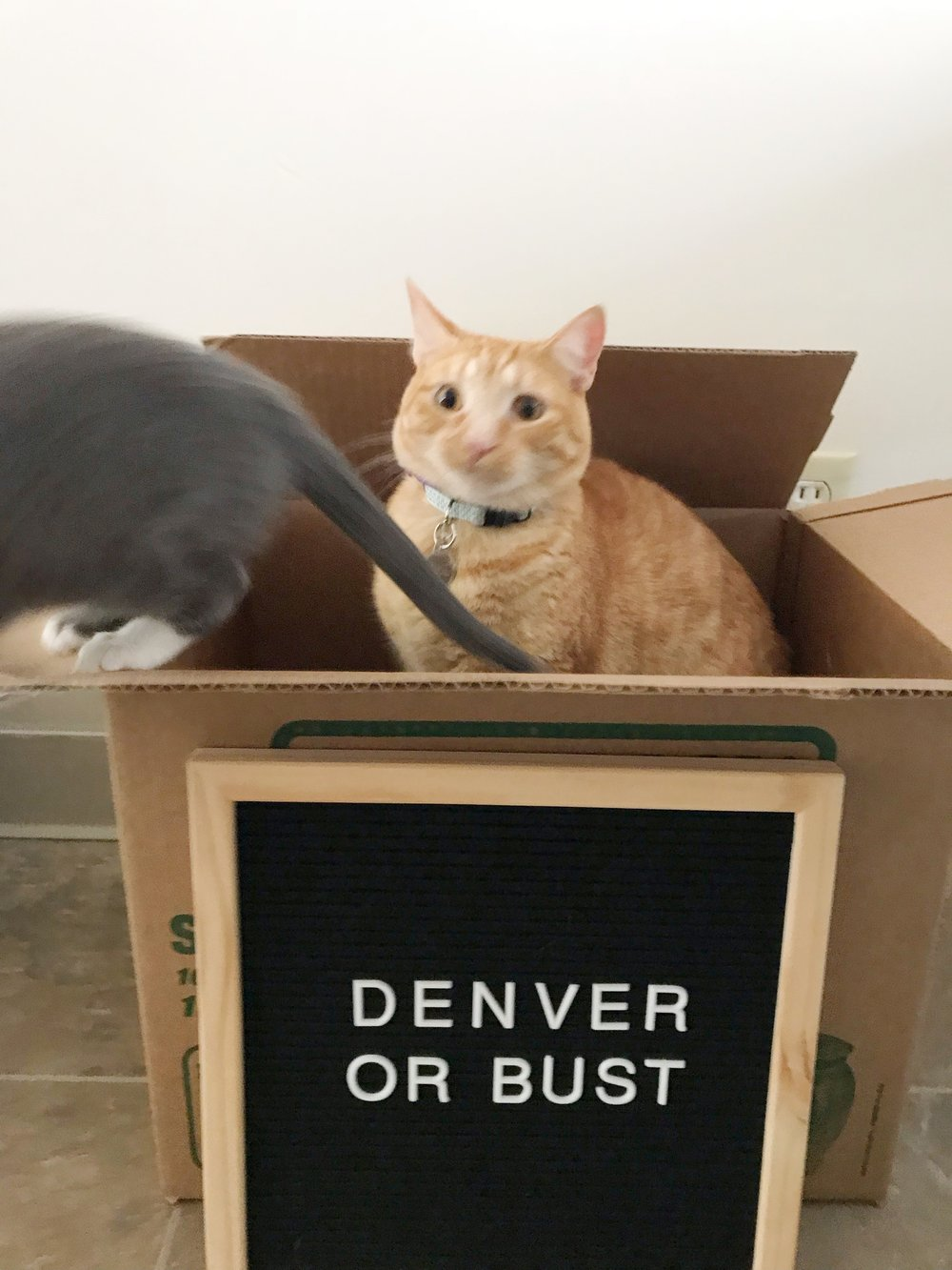 Cats with Letterboard