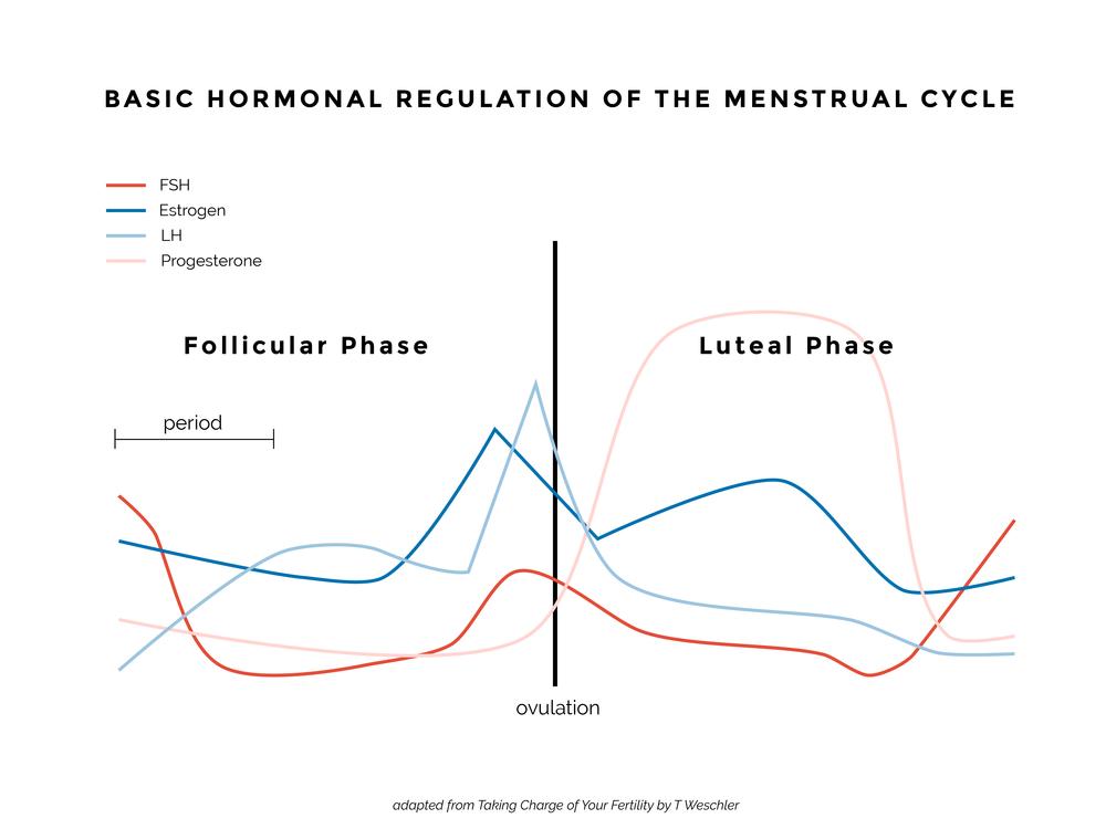 Hormone Graph.png