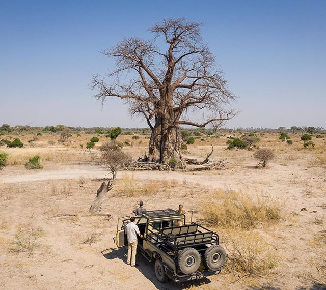 Scanning the 'tree of life' in the Okavango Delta, last month! #virtualwonders  This incredible project, supported by National Geographic Labs and in collaboration with 3D media company @VirtualWondersllc, uses the power of science and technology to create immersive experiences about the world around us. For more ways on how #NatGeoLabs is harnessing tech & innovation to accelerate exploration and conservation, check out: www.nationalgeographic.org/labs